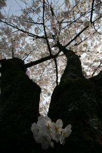 2008_054