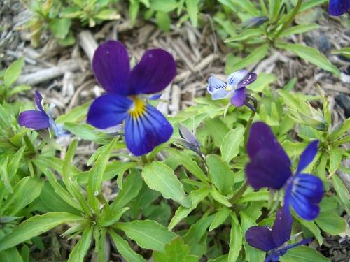 花も撮ってみました。
