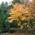佐毘売山神社の紅葉